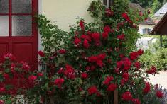 Seminarhaus_Krone_Schenkenzell_Haus (5)