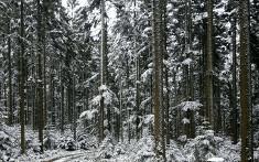 Seminarhaus_Krone_Schenkenzell_Wald (2)